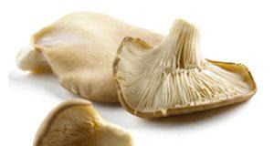 oyster1 300x160 - istiridye Mantarının Faydaları