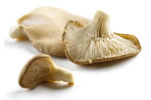 oyster1 - istiridye Mantarının Faydaları